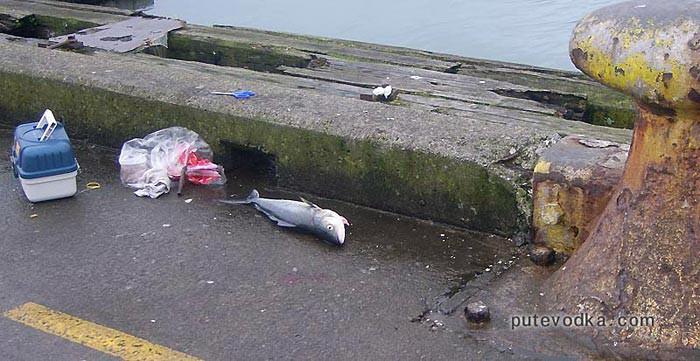Новая Зеландия. Понеке (Веллингтон). Улов рыбака на набережной.