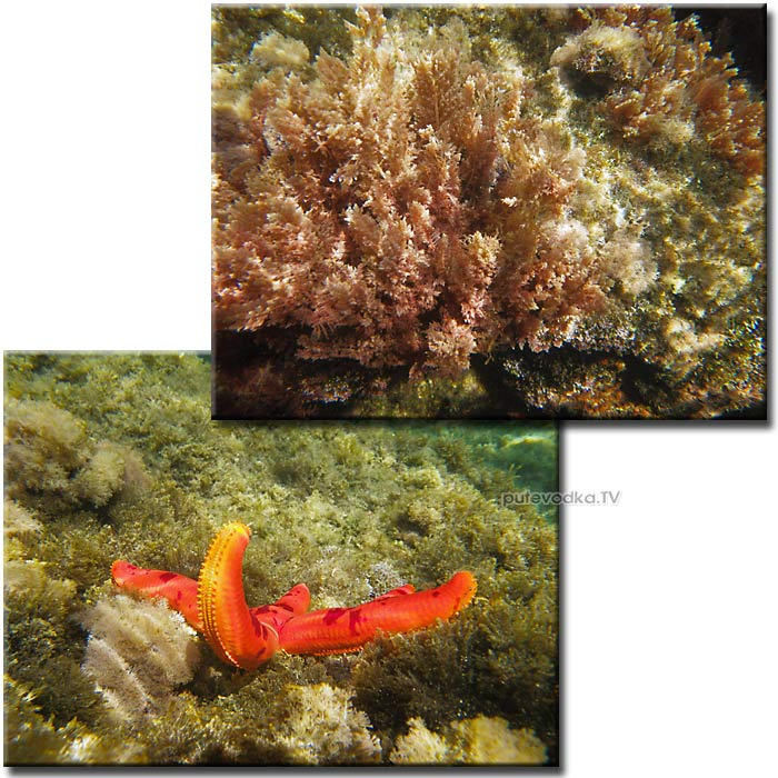 Греция. Ионическое море. Пелопоннес. Наваринская бухта. Подводная жизнь.
