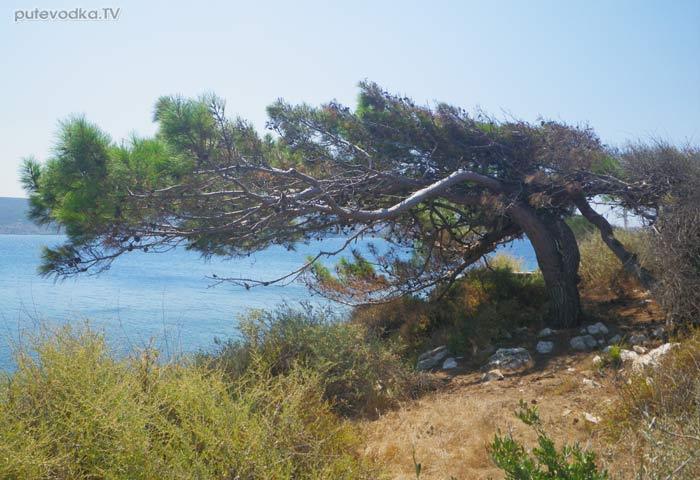 Греция. Ионическое море. Пелопоннес. Берег Наваринской бухты.
