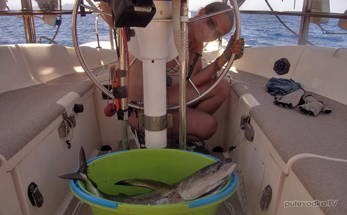 Яхта «Пепелац». Судовой журнал. Рыбалка. Тунец.